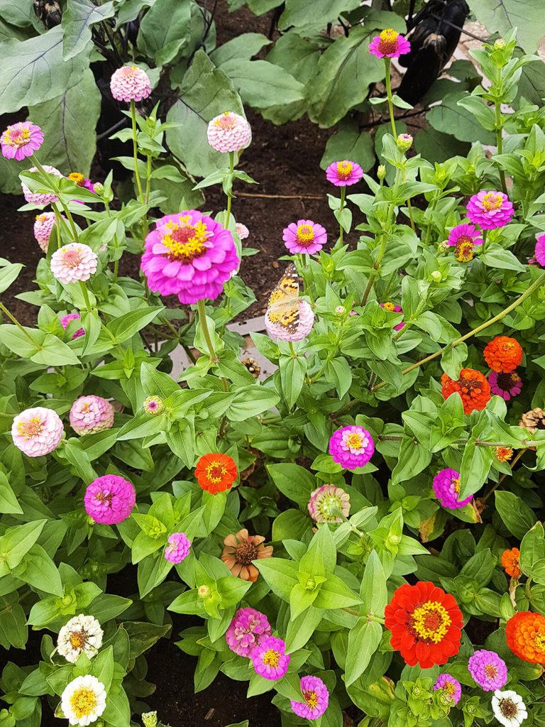 Blumen Schmetterling Foto